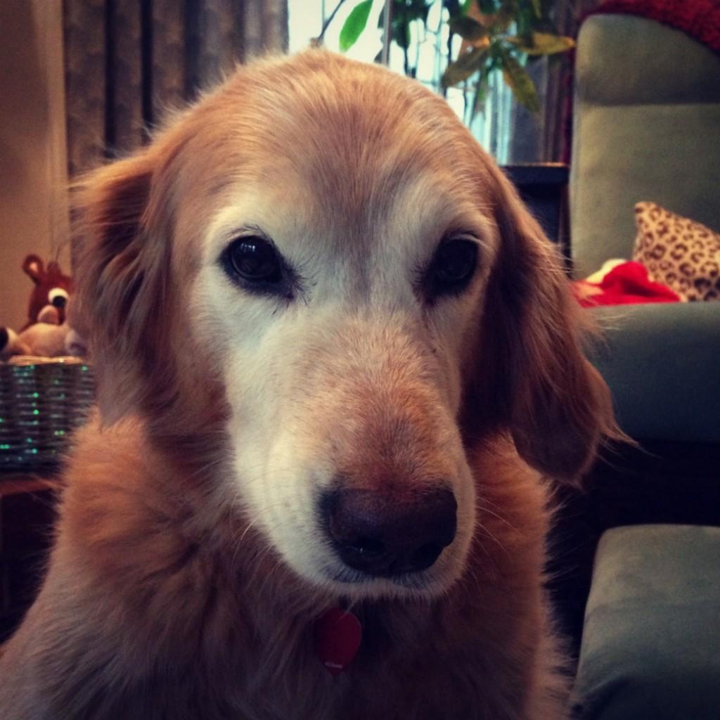 therapist dog